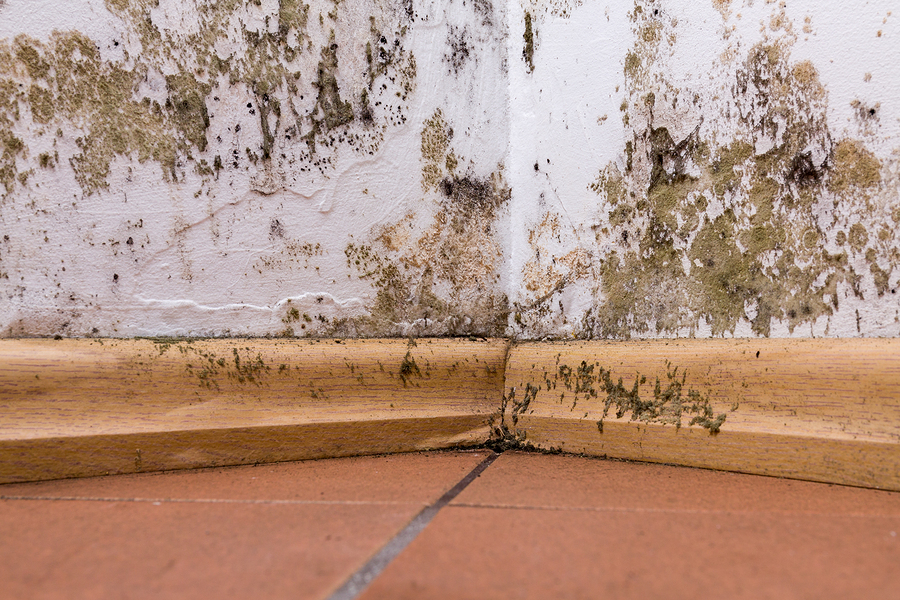 Are You Breathing Mold Spores?